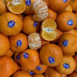 mandarins-nectar