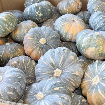 Fruiting Vegetables and Curcubits