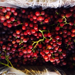 RED SEEDLESS GRAPES3