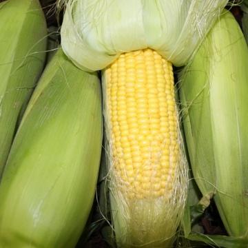 Legumes & Other Vegetables