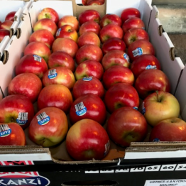 25-3-19 KANZI APPLES