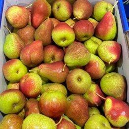 pears-corella-red