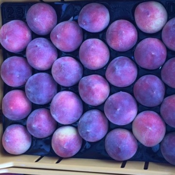 Stone Fruits